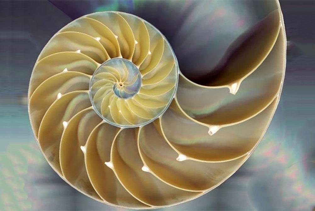 проверенных популярных теория фибоначчи в фотографии жизни кругу, бесконечность