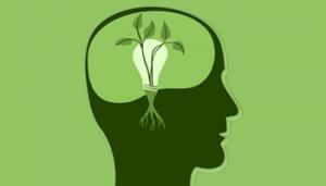 ذهنیت رشد و تاثیر آن بر رشد شرکتها