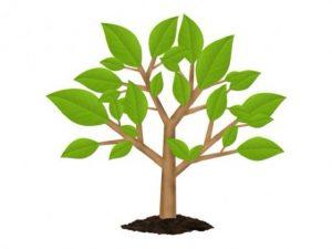 همه چیز در مورد درخت تصمیم (Decision Tree)