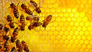 رویکرد هوش ازدحامی با استفاده از کلونی زنبور عسل مصنوعی برای حل مسائل بهینهسازی