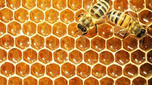 حل مسائل خوشهبندی با استفاده از الگوریتم کلونی زنبور عسل مصنوعی