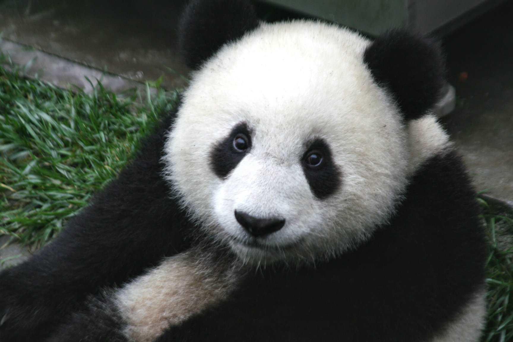کتابخانه Pandas در پایتون