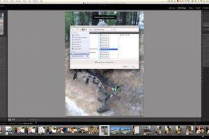 لایت روم و بازیابی تصاویر به کمک فایل پیش نمایش آنها – راهنمای گام به گام