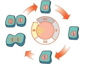 پدیده هیسترزیس در زیست شناسی سلولی و ژنتیک — به زبان ساده