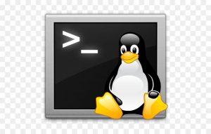 شل اسکریپت (Shell Script) روی VPS (بخش اول) — از صفر تا صد