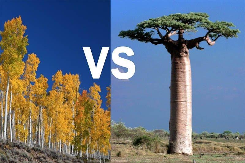 جنگل تصادفی یا درخت