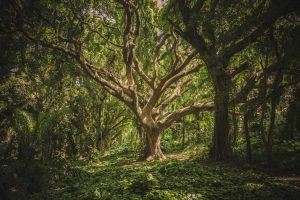 بصری سازی یک درخت تصمیم از جنگل تصادفی در پایتون با Scikit-Learn — از صفر تا صد