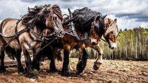 مفهوم اسب بخار — به زبان ساده (+ دانلود فیلم آموزش رایگان)