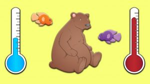 تفاوت های جانداران خونگرم و خونسرد — به زبان ساده