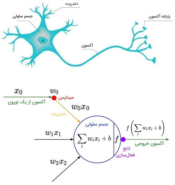 نورون و مدل آن