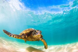 دارودستههای حیات: خزندگان دریازی زنده – بخش سوم