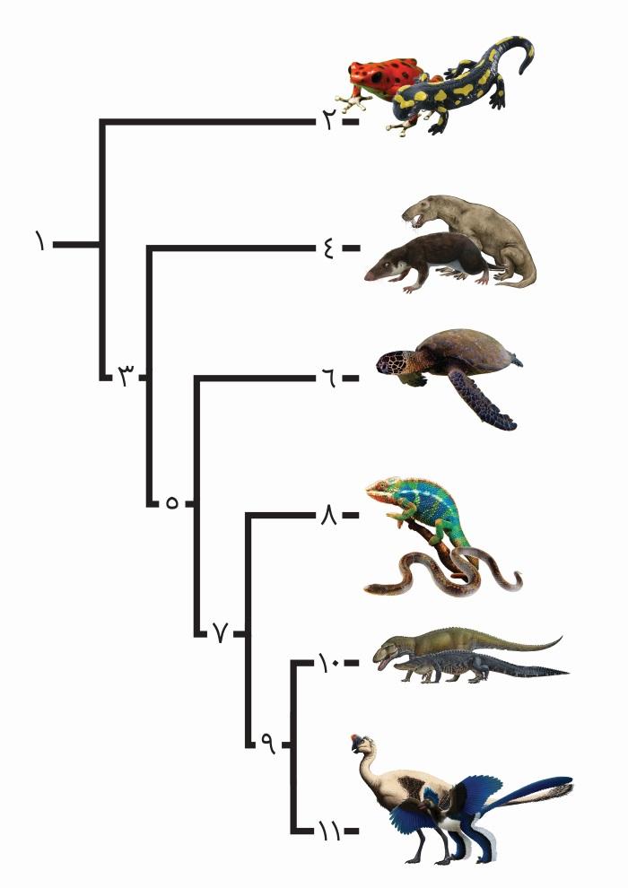 تکامل و ردهبندی مهرهداران خشکیزی