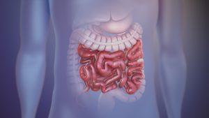 روده کوچک و نقش آن در دستگاه گوارش | هر آنچه باید بدانید