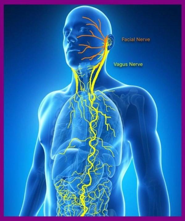 اعصاب واگ