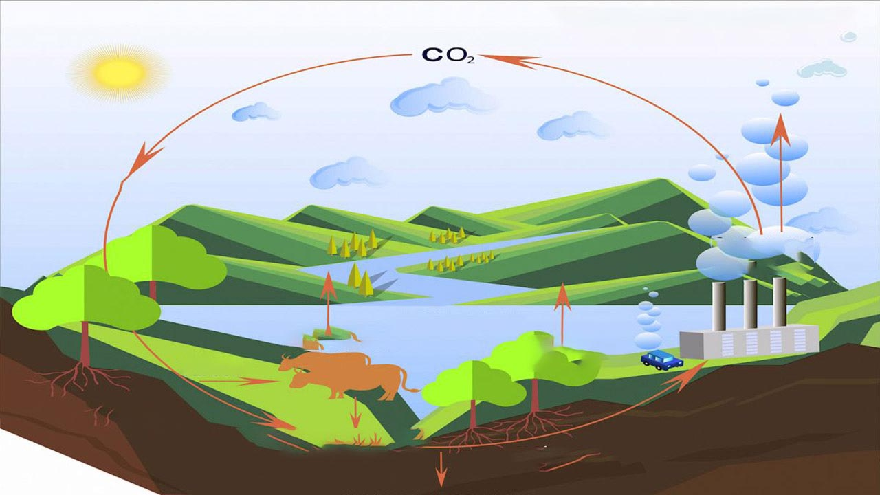 چرخه کربن — به زبان ساده