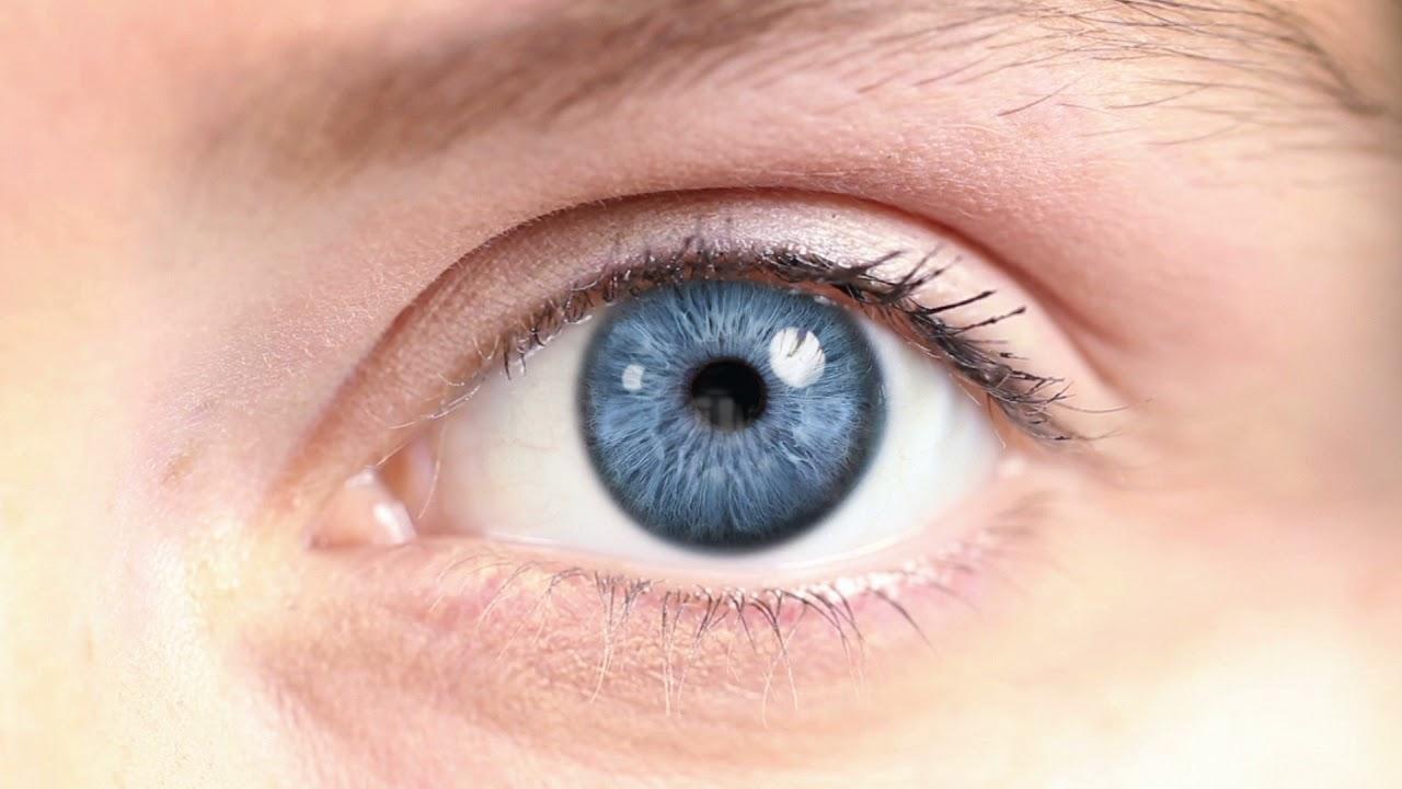 تکامل چشم، بینایی و دید رنگی در جانوران مختلف — بخش اول