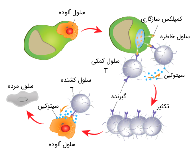 مکانیسم ایمنی سلولی