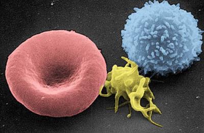 تصویر پلاکتها در رگهای خونی