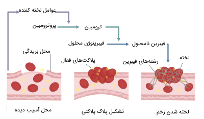 مکانیسم لخته شدن خون با پلاکت