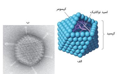 ویروس بیست وجهی
