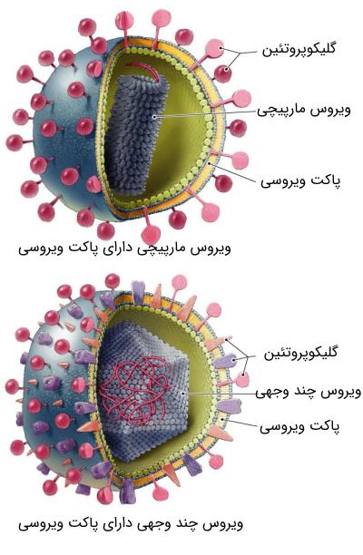 ویروسهای دارای پاکت ویروسی