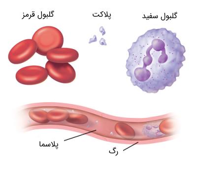 سلول های خونی