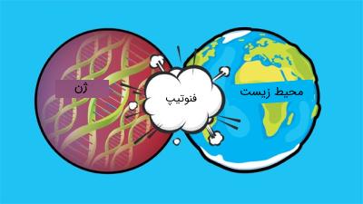 تاثیر محیط زیست و ژن ها بر روی فنوتیپ ارگانیسم