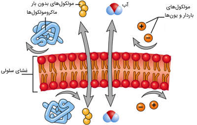 انتقال از غشای سلولی
