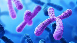 کروموزوم چیست؟ — به زبان ساده