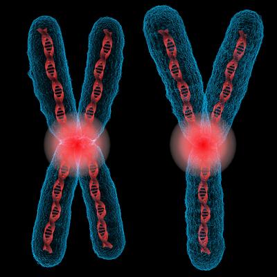 کروموزوم های جنسی