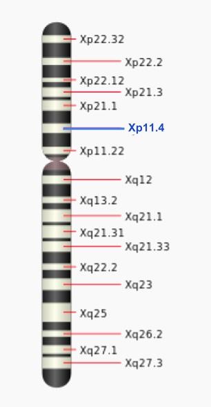 لوکوس های کروموزوم X
