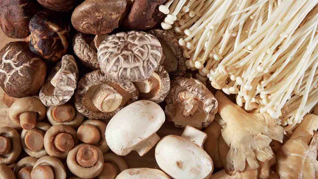 پرورش قارچ — از صفر تا صد