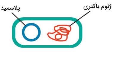 پلاسمیدهای باکتری