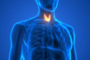 غده تیروئید چیست ؟ — آناتومی، وظایف، بیماری ها و دیگر دانستنی ها