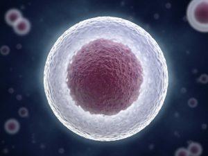 هسته سلول — به زبان ساده