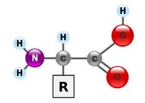 اسید آمینه — از صفر تا صد