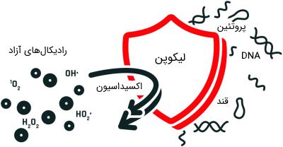 عملکرد آنتی اکسیدان لیکوپن