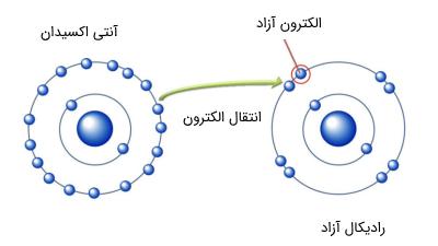 عملکرد آنتی اکسیدان ها