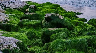 صخره های جلبکی
