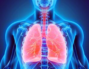 ریه و سیستم تنفسی — هر آنچه باید بدانید