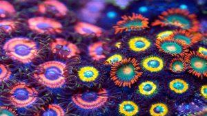 زوآنتایدهای دریایی — ویدیوی علمی