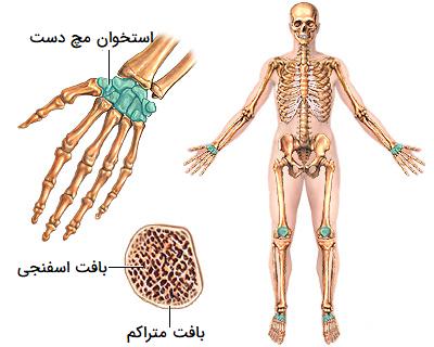 استخوان کوتاه