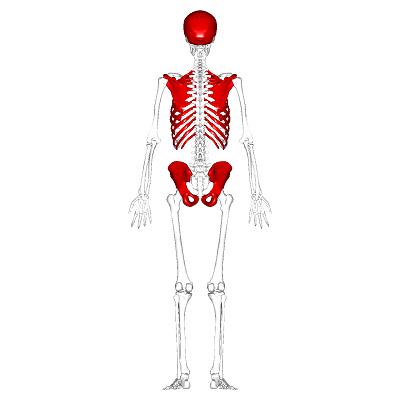 استخوان های پهن
