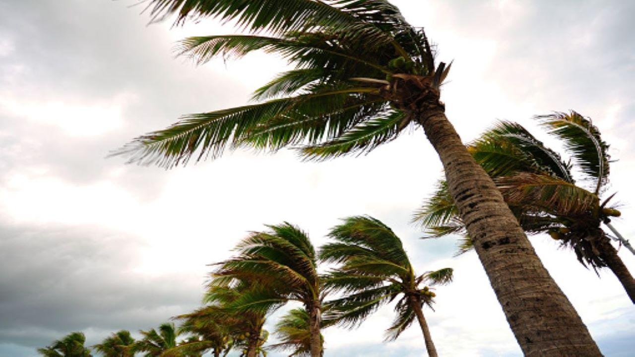 حرکت درختان با وزش باد — زنگ تفریح [ویدیوی کوتاه علمی]