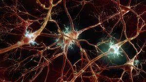 دستگاه عصبی چیست؟ — به زبان ساده