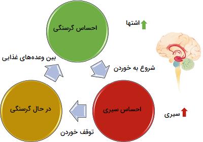 مکانیسم ارسال پیام سیری و گرسنگی به مغز