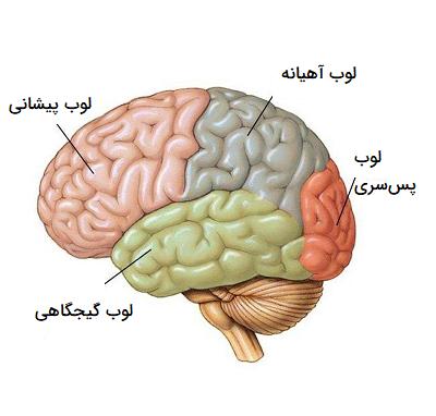 ساختمان مخ