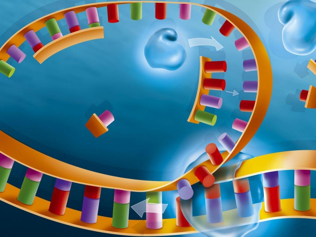 همانند سازی DNA — به زبان ساده