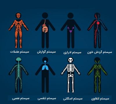 انواع سیستم های بدن