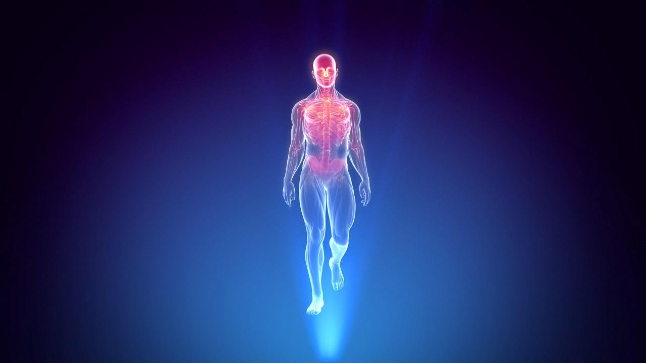 بدن انسان ، آناتومی و عملکرد | به زبان ساده